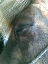 allergische reactie paard
