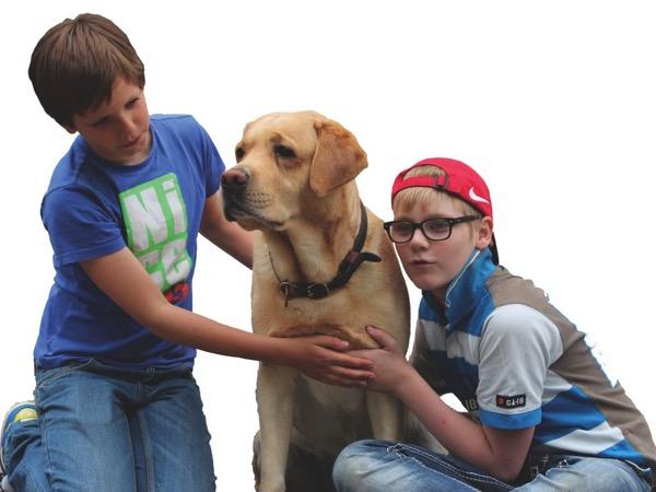 Jasper, Koda en Jeff Quantum-Touch